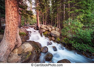 Forest Stream. Small Mountain River and Forest Landscape.