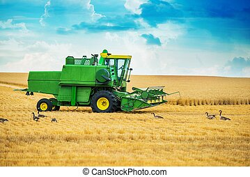 Harvester at Work. Modern Harvester on the Farm Field in...
