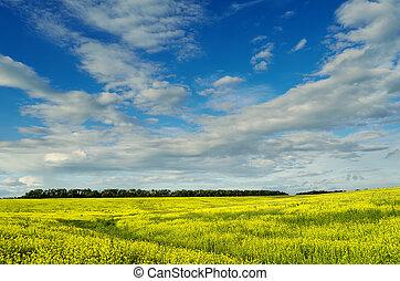 yellow field under beautiful sky - field of yellow mustard...