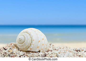 Sea shells beach background collection
