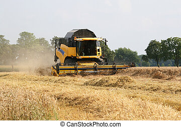 Combine harvester on a wheat field