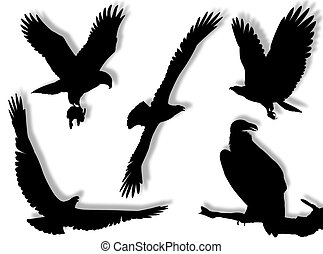 Eagle silhouette in different poses and attitudes