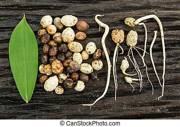 semente, Germinação