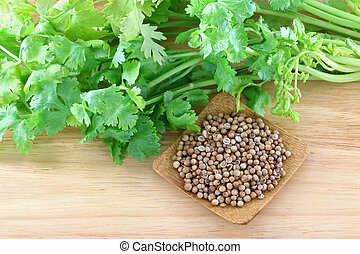 fresh coriander, cilantro and seeds - Closeup photo of fresh...