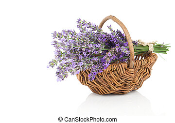 Basket with a lavender, isolated on white background