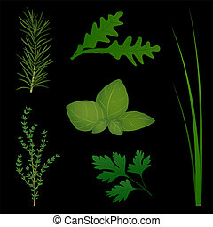 Culinary Herbs Black - The six most popular culinary herbs...