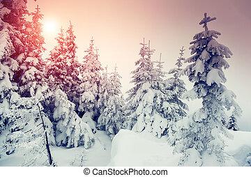 maravilloso, invierno, paisaje