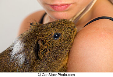 Guinea pig - Female hand holding a beautiful guinea pig