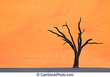 Single tree in deadvlei