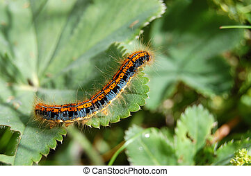 Colour caterpillar on green grass