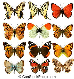 Butterfly\'s, in the white background