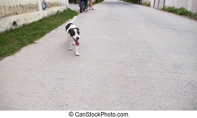 Happy Dog Walking on the Road. - Tired Happy Dog Walking on...