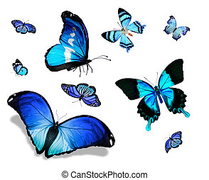 Different blue butterflies flying