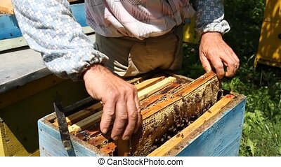 Beekeeper working on beehive