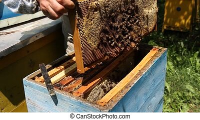 Beekeeper working on beehive with honeycomb Honey production...