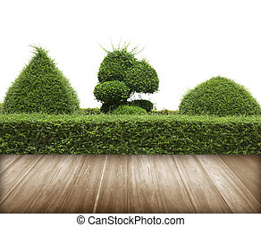 Green bush with wall and flooring wood - Green bush with...