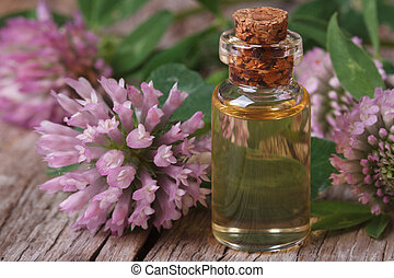 clover oil in a bottle nd flowers macro horizontal - clover...