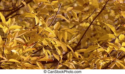 Close up autumn leaves background - Warm colors moving...