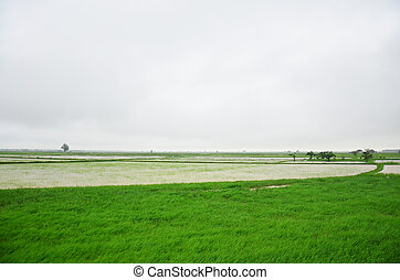 paddy field located in Bago, Myanmar
