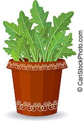 arugula in a flower pot