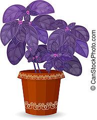 purple basil herb in a flower pot