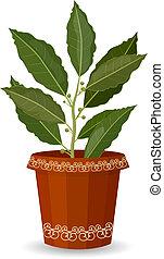 tree bay leaf in a flower pot
