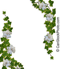 Floral Border Ivy and Gardenias - Image and illustration...