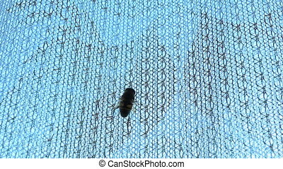 Wasp crawling up the curtain - Bee or wasp is crawling up...