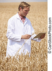 Scientist With Digital Tablet Examining Wheat Crop In Field