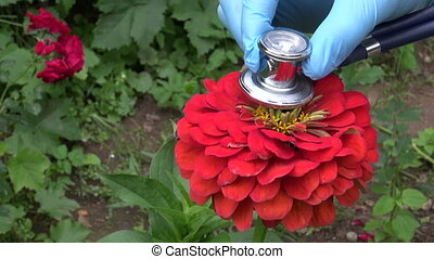 looking summer flower health - gardener looking beautiful...