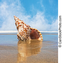 Trident Shell - A trident seashell on a beach with flowing...
