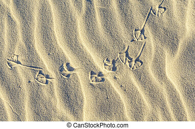 background of sand ripples at the beach with prints of birds...