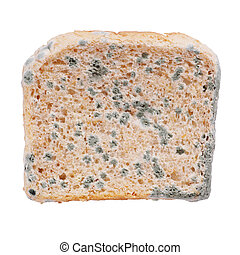 moldy bread - moldy toast bread isolated on white