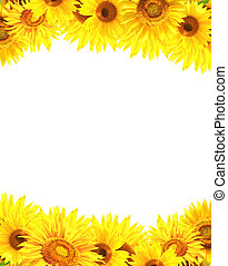 Border with sunflowers - Border with many yellow sunflowers...