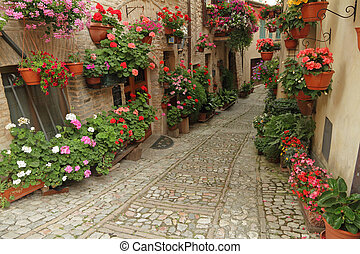 old paved street with incredible many flowers in little town...