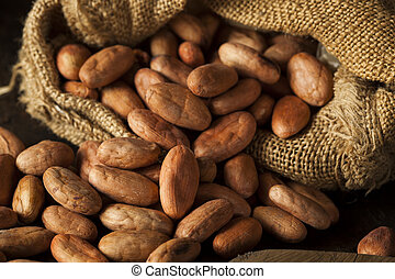 Raw Organic Cocoa Beans in a Bowl