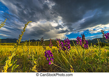 Indian Paintbrush flowers Colorado Landscape - Indian...