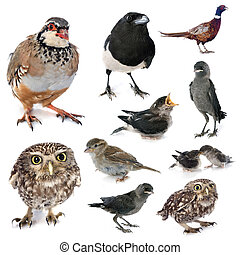group of wild birds - group of european wild birds in studio