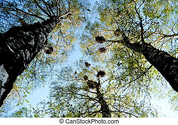 Steepe birds play important role in steepe region