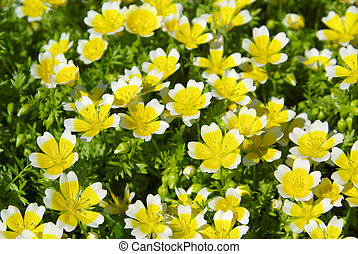 poached egg plant 01
