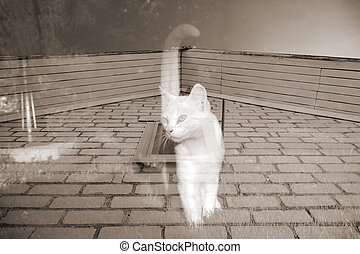 Ghost Cat - A ghost cat against the background of a brick...