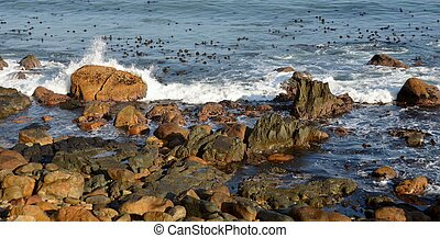 Rocky shore - Seascape with sea and coast line with red...