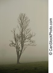 Fading in the Mist - Nearly leafless tree in thick fog