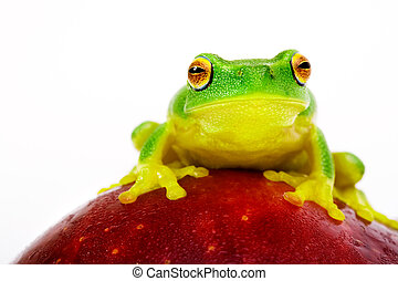 Green tree frog sitting on apple