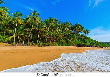 landscape goa - beautiful landscape beach in Goa in India