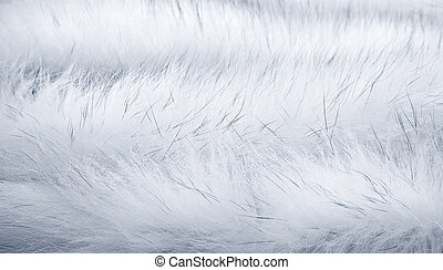 White fur background - Background of white Arctic fox fur