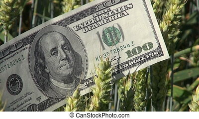 dollar banknote on wheat ears