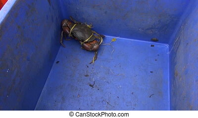 live crab in plastic box - Kochi