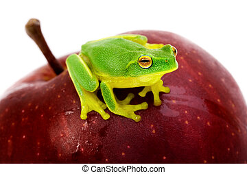 Small green tree frog sitting on apple