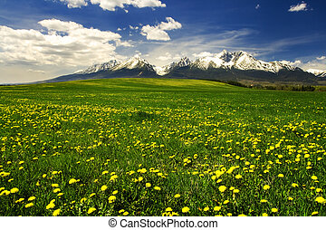 High Tatras mountains in Slovakia - Grass field with High...